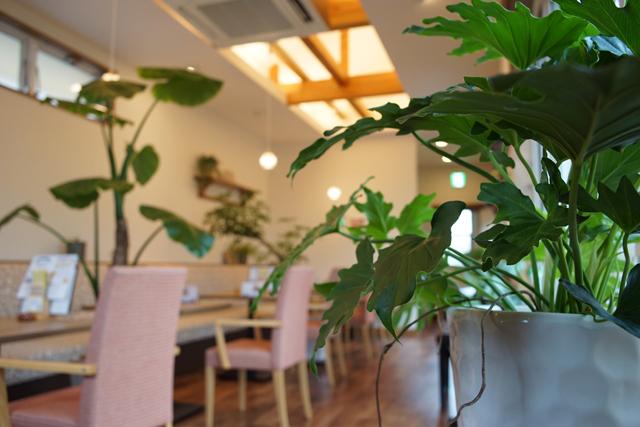 新潟市で草月流いけばな教室
